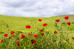 Spring in Tuscany Royalty Free Stock Photos