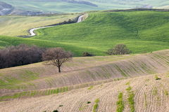 Spring in Tuscany Stock Images