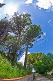 Spring in Tuscany, a walk in park near San Gimignano Royalty Free Stock Photography