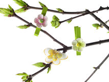 Spring twig Stock Images