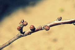 Spring twig. Spring. The beginning of spring. stock photo