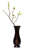 Spring twig with young leaves in vase Stock Images