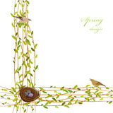 Spring twigs background. Stock Photography