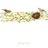 Spring twigs background. Stock Images