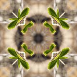Spring twigs with buds and small leaves, young shoots, macro. A collage of photos, pattern - spring twigs with buds and small leaves, young shoots, macro stock illustration