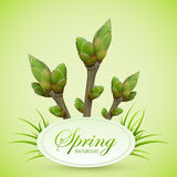 Spring twigs on green background Royalty Free Stock Photos