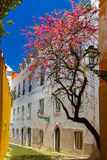 Spring typical Lisbon street, Portugal Royalty Free Stock Photos