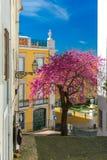 Spring typical Lisbon street, Portugal Stock Photos