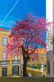 Spring typical Lisbon street, Portugal Stock Photography