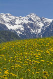 Spring in Tyrol Royalty Free Stock Photography