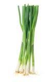 Spring Uien op Stock Fotografie