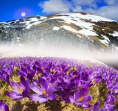Dragobrat, the spring Carpathians. Spring in the Ukrainian Carpathians against the backdrop of wild snow tops and frosted spruces are shelters and ski slopes Royalty Free Stock Photos