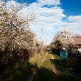 Spring in the Ukrainian village. аpple blossoms Royalty Free Stock Photography