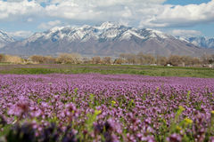 Spring in Utah Stock Images