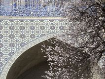 Spring in Uzbekistan. The spring festival of Navruz. Flowering trees near the mosque Bibi Khanum, Samarkand.  royalty free stock photography