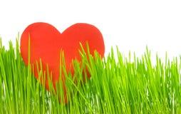 Spring and Valentine spirit Royalty Free Stock Photo