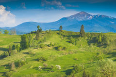 Spring Valley Carpathian abaixo do Hoverla Fotografia de Stock Royalty Free