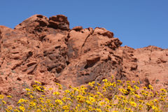 Spring in Valley of Fire Nevada Stock Photography