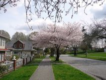 Spring in Vancouver, Canada Stock Photos