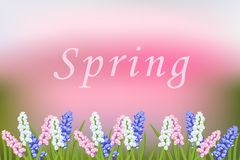 Spring vector blurred background with blooming flowers. Muscari. Multicolor, pink, white, blue.Branch of green leaves of grass, decorative frame.Greeting card Stock Photo