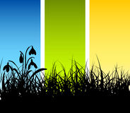 Spring vector grass background Royalty Free Stock Images