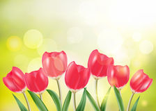 Spring vector, set of red tulip and green grass in sunny bokeh b Royalty Free Stock Image