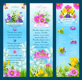 Spring vector wishes banners and flowers. Springtime greetings and wishes vector banners. Hello Spring holiday design of blooming flowers poppy, daffodil or lily Royalty Free Stock Images