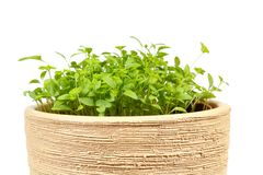 Spring vegetable in ceramic pot on a white Royalty Free Stock Image
