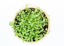 Spring vegetable in ceramic pot on white Royalty Free Stock Images