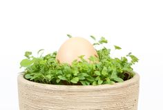 Spring vegetable with egg in ceramic pot Royalty Free Stock Image