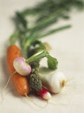 Spring vegetables Royalty Free Stock Images