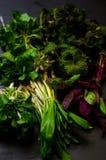 Spring vegetables Stock Photos