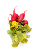 Spring vegetables, fresh, radish,. Spring vegetables, fresh, red radish, image of a Stock Image