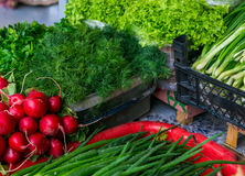 Spring vegetables - onion, radish, dill, salad for sale.  Royalty Free Stock Photo