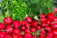 Spring vegetables - onion, radish, dill, salad for sale.  Royalty Free Stock Photography