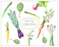 Spring vegetables set royalty free illustration