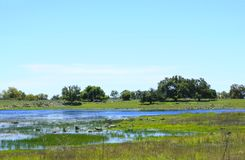 Spring Vernal Pool in Santa Rosa Plateau Stock Photos
