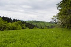 Spring view of agriculture fields in a mountain area. Near Bran city in Romania Stock Photography