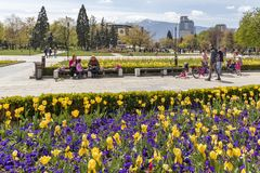 Spring view of flower garden in front of National Palace of Culture, Bulgaria. SOFIA, BULGARIA -APRIL 21, 2019: Spring view of flower garden in front of National stock photography