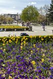 Spring view of flower garden in front of National Palace of Culture, Bulgaria. SOFIA, BULGARIA -APRIL 21, 2019: Spring view of flower garden in front of National stock image