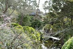 Spring view in Japanese Tea Garden. Japanese Tea Garden, Golden Gate Park, San Francisco, California: 03/23/2018 stock photography