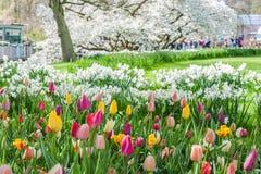 Spring view of Keukenhof park Royalty Free Stock Images