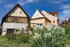Spring view of the Rasnov citadel inner countryard, in Brasov county (Romania), with blooming white irises in the foreground and. Beautiful medieval stone royalty free stock photos