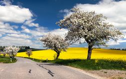 Spring view of road with alley Royalty Free Stock Images