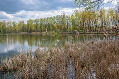 Stawiki lake on the border between Sosnowiec and Katowice cities. Spring view of the Stawiki lake on the border between Sosnowiec and Katowice cities, Poland Royalty Free Stock Photo