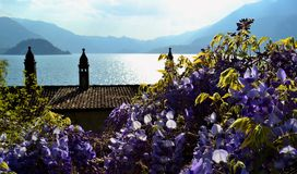 Spring view to bush of lilac blossoming, lake Como and Bellagio. Royalty Free Stock Images