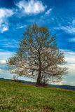 spring view of tree on meadow Stock Photos