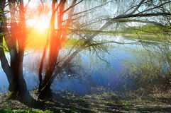 Spring view with willow under sunshine Stock Images