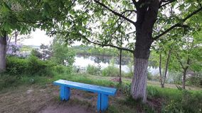 Spring village bench on the river bank under a blooming chestnut tree. Spring village bench on the river bank under a blooming chestnut tree stock video