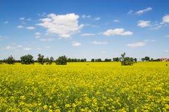 Spring village landscape Stock Image